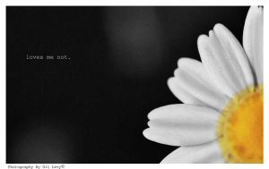 Loves me not by Gil-Levy