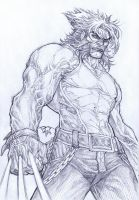 Wolvie by pant