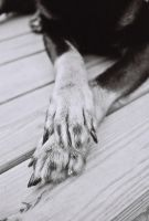 Paws Crossed by JPGagnon