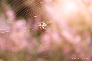 Tiny Spider by danielle06