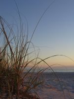 Sea Oats by tabsquared