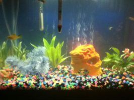 my fish tank by plusewolf