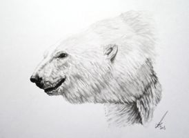 Polar bear by salt25