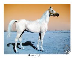 Arabian Horse 2 by AMROU-A