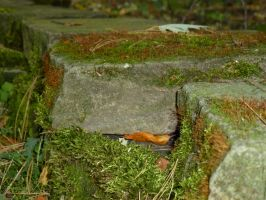 More Moss Covered Stones by AndehDulac