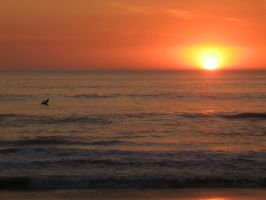 California Sunset 2 by Oliuss