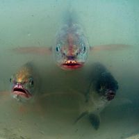 3 little fish by fotottiv