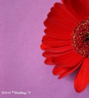 Red Gerbera by Witchling-V