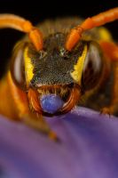 Nomada Bee Portrait Sleeping 2 by Alliec