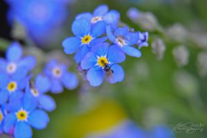 Forget me not by XavierSchneider