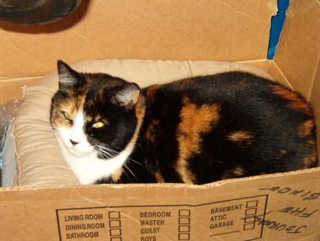 Cat in a Box by Bobdoe
