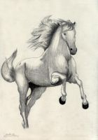 Horse by esaber