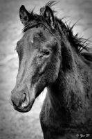 BLACK HORSE by Yair-Leibovich