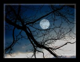 Full Moon II by Saturiell