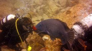 Experience the Dive Life with Lets Go Adventures by letsgoadventures