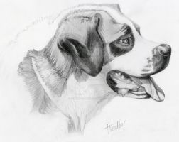 Dog by heather-may