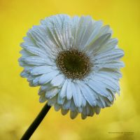 about.to.spring by vicente-oliveira