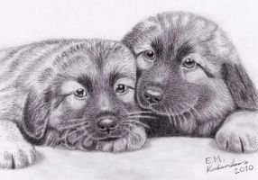 Sarplaninac puppies by Elkenar