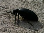 Nature's Charms: The ground view of a bug's life by Sonichiko