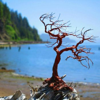 Windblown tree by the Columbia River by ryan503