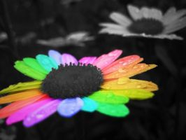 Rainbow Flower by alyakmi