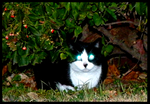 Mr. Laser Eyes by Leonca