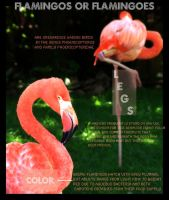 Flamingoes by emmytonks