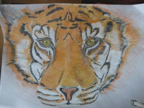 Tiger by Anderthil