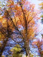 Autumn Trees by princess-of-crows