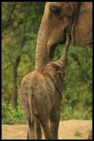 Parenting and Trust by timseydell