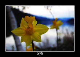 Mellow Yellow by punkie078