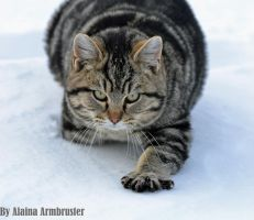 Snow Cat Walks... by AlainaLee