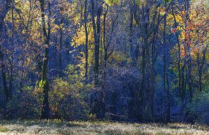 forest II by psdlights