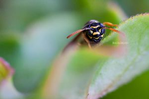Wasp by Bliss89