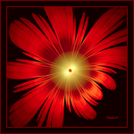 Red Flower Power by baba49