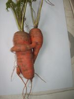 valentines carrots by nut-tree