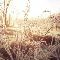 Cold morning XXXX by Juliana-Mierzejewska