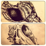 Shell Drawings by MsTemmii