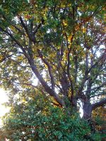 Tree and sun by SweetHurricane