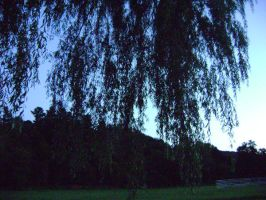 Through the Willow Tree by ILoveDanny