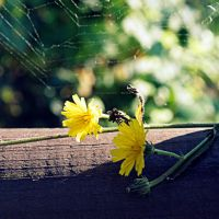 October is yellow 12 by martaraff