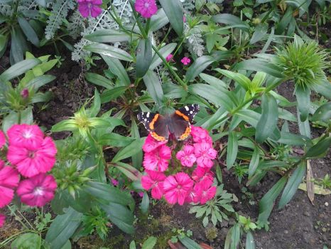 Butterfly on flower by karinvampire223344
