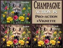 Champagne   ACTION Ps by Tetelle-passion