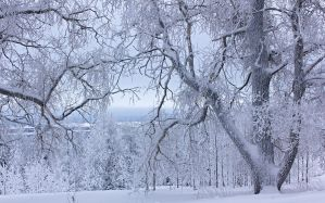 Snow-White Trees by DeingeL
