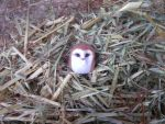 SOLD Hand sculpted 4cm owl with fluffy woolly coat by MyselfMasked