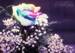 Rainbow Rose by EchoRukia