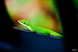 Green Lizard by juhitsome