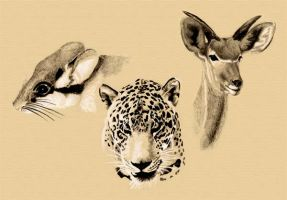 Animals trio watercolor by Osmont2