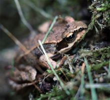 Froggy! by Ehmer