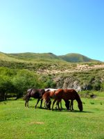 Mongolian Horses and Countryside by DaraBlack